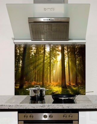 Picture of Sunlit Forest Splashback