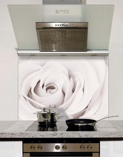 Picture of White rose close up Splashback